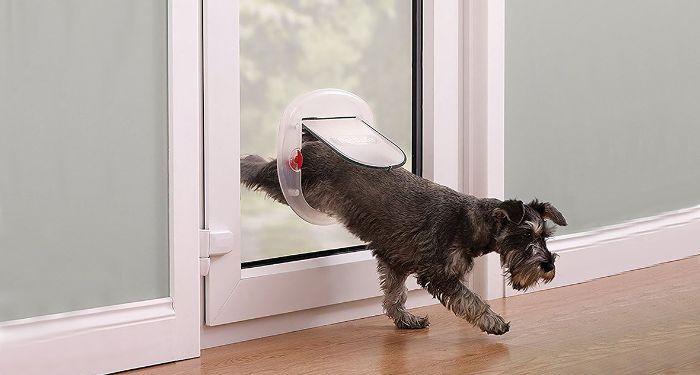 dog using a pet flap